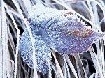 До 13 грудня буде холодно з великою кількістю опадів