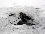 У Дніпропетровську потонули двоє рибалок