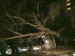 Дерево впало одразу на п'ять автівок - фото