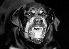 На Черкащині собаки загризли 5-річну дитину - фото
