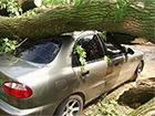 З-за можливого шторму у Києві водіїв закликають не ставити машини під деревами