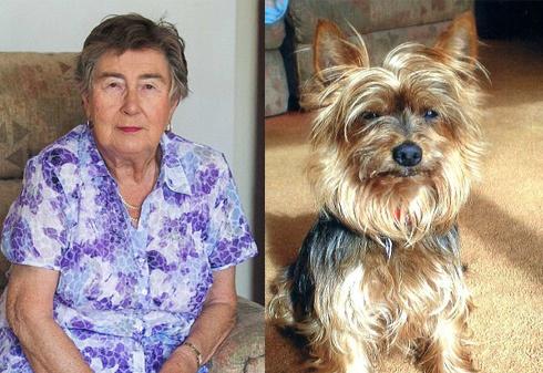 Старенька британка покусала вівчарку, аби захистити свою маленьку собачку - фото
