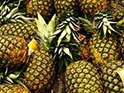 В Іспанії всередині ананасів знайшли 200 кг кокаїну