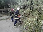 На Шацьких озерах 7 відпочиваючих отримали поранення внаслідок буревію