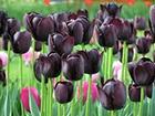 Волонтери «Чорного тюльпану» відновили пошук тіл в зоні АТО