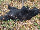 В Хабаровському краю мисливець та ведмідь вбили один одного