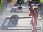 В Хабаровську ведмідь увірвався в торговий центр [відео]