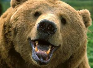 В Примор'ї ведмідь напав на двох дітей - фото