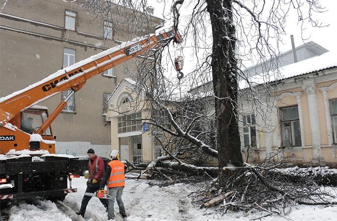 У Харкові через снігопад впали тисячі дерев - фото
