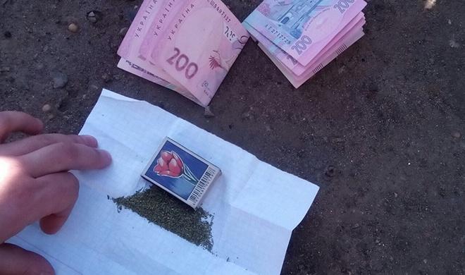 У Слов'янську дільничний поліцейський вирощував коноплю на продаж - фото