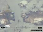 Видобуток бурштину на Рівненщині та Житомирщині показали прикордонники за допомогою літака