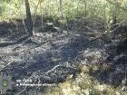 На Рівненщині прив'язали підлітка до дерева, наділи на голову пакет й хотіли спалити