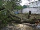 В Одесі дерево впало і вбило людину