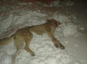 На Чернігівщині на чоловіка напав скажений вовк - фото
