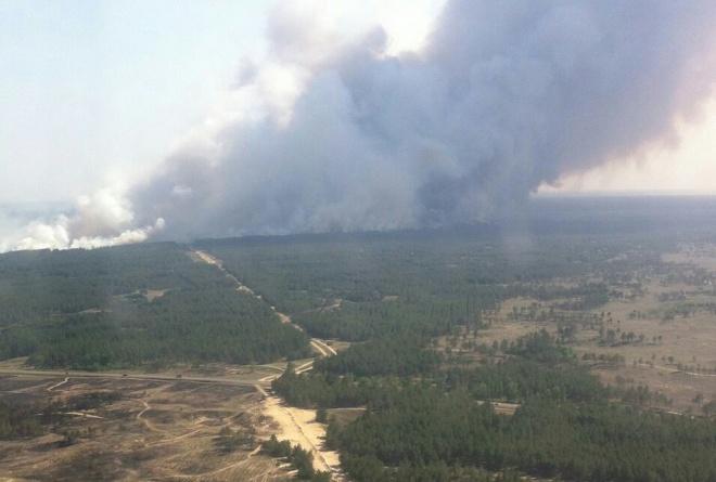 На Херсонщині горить ліс - фото