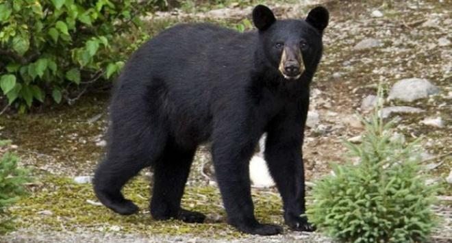 Заблукалий у лісі хлопчик розповів, що йому допоміг ведмідь - фото