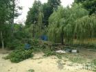 Дерево придавило людей в санаторії на Харківщині, загинула жінка
