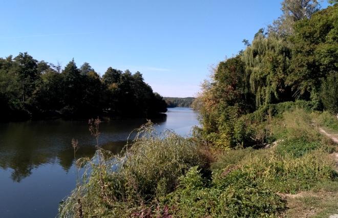 В річку Рось потрапила невідома речовина – гине риба та інші організми - фото