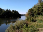 В річку Рось потрапила невідома речовина – гине риба та інші організми