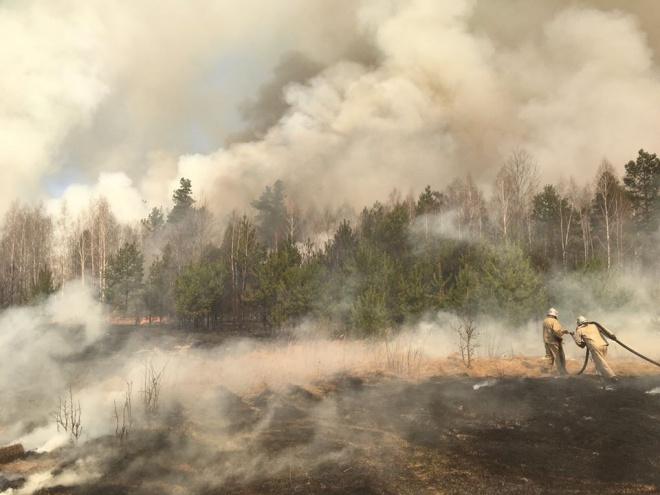 Затримано двох паліїв, які спричинили наймасштабнішу пожежу на Житомирщині - фото