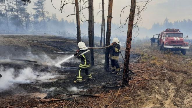 Пожежі біля лінії розмежування на Луганщині продовжують гасити - фото