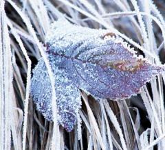 До 13 декабря будет холодно с большим количеством осадков - фото