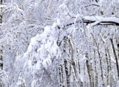 С 24 января в Украине похолодает - фото