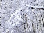 С 24 января в Украине похолодает