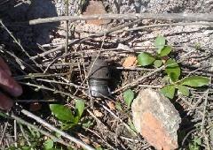 Мужчина подорвался при раскопке огорода - фото