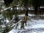 На Луганщине снег повалил немало деревьев