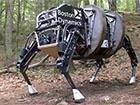 Google купил известного разработчика роботов Boston Dynamics