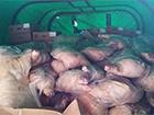 Комбат сопровождал 10 тонн мяса на оккупированную часть Луганщины