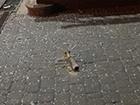 В Киеве из гранатомета обстреляли отделение банка, - соцсети