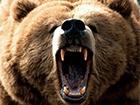 В России медведь цапнул за руку посетительницу кафе