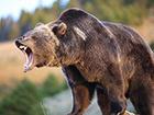 Убегая от медведя, полицейский застрелил брата
