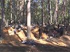 На Волыни сделали облаву на незаконную добычу янтаря, задержано 80 копателей-старателей