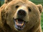 В Приморье медведь напал на двух детей