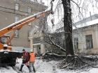 В Харькове из-за снегопада упали тысячи деревьев