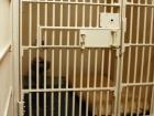 В России украинца за «шпионаж» засудили на 11 лет тюрьмы