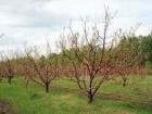 На Закарпатье продали землю для АТО-шников, оформив деревья на ней как объекты недвижимости