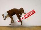 Пропагандистов LifeNews выдворили из Азербайджана