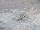 В результате обстрела боевиками Марьинки ранен местный житель