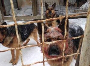 Под Киевом овчарки насмерть загрызли мужчину на глазах его дочери - фото