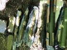 В Киеве правоохранители обнаружили тайник с противотанковыми гранатометами