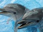 Суд арестовал имущество Киевского дельфинария «Немо»